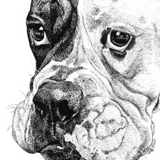 cami-boxer-pen-ink
