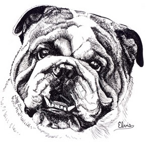 Elvis-Bulldog