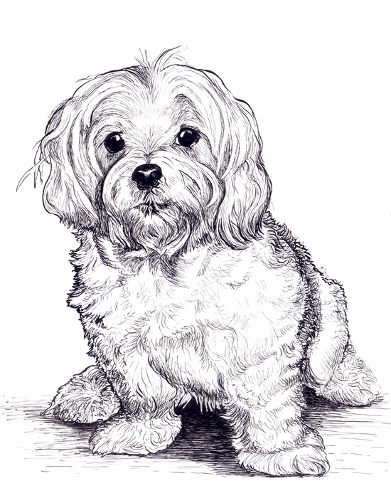 how to draw pet portraits