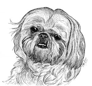tosh-a shih-tsu-in pen and ink