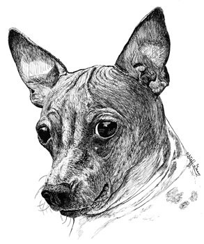 zanetta-american-hairless-ink